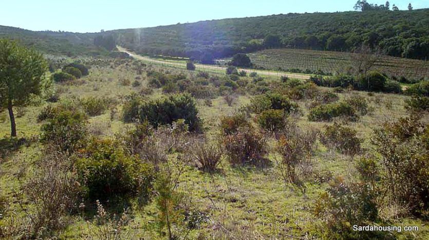vegetazione terreno sa misa