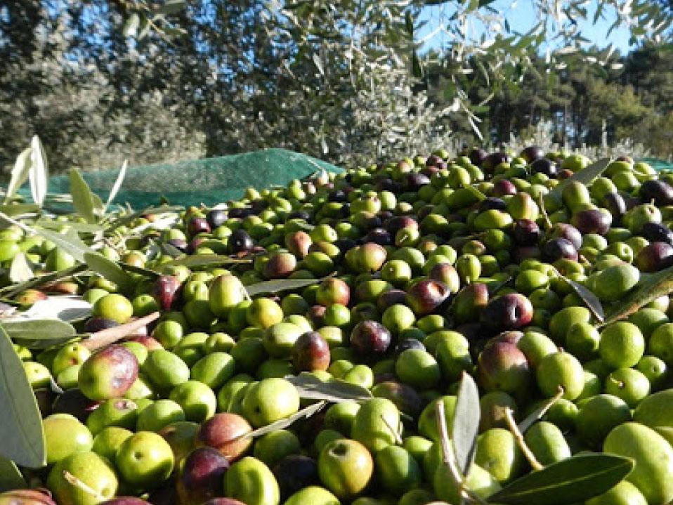 olive dolianova